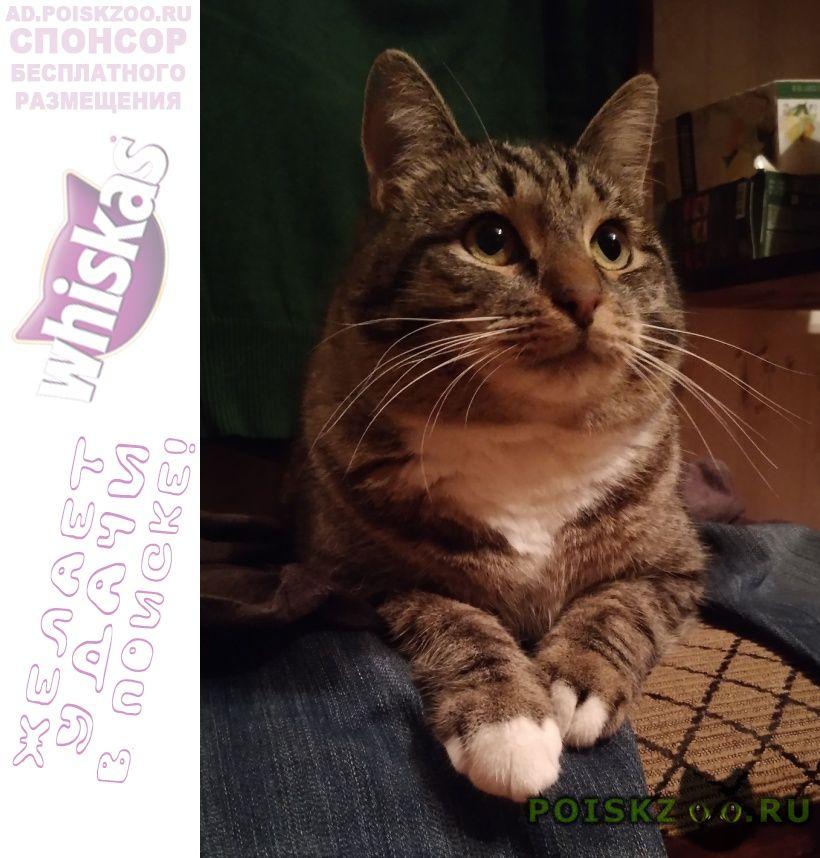 Пропал кот в районе гольяново г.Москва