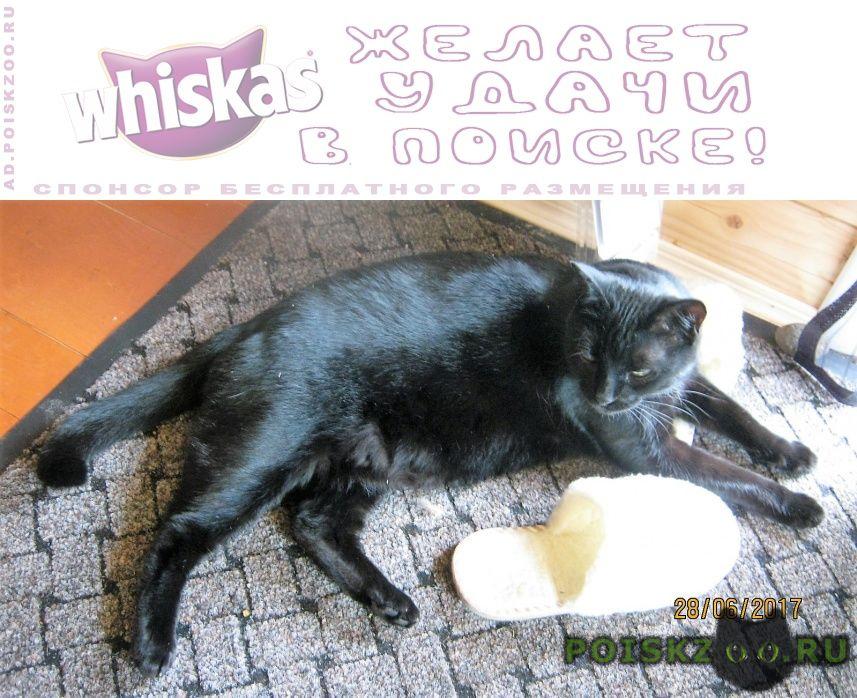 Пропал кот помогите найти  г.Боровск