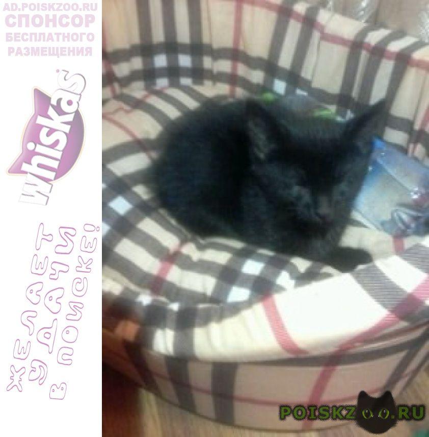 Пропала кошка черная годовалая г.Люберцы