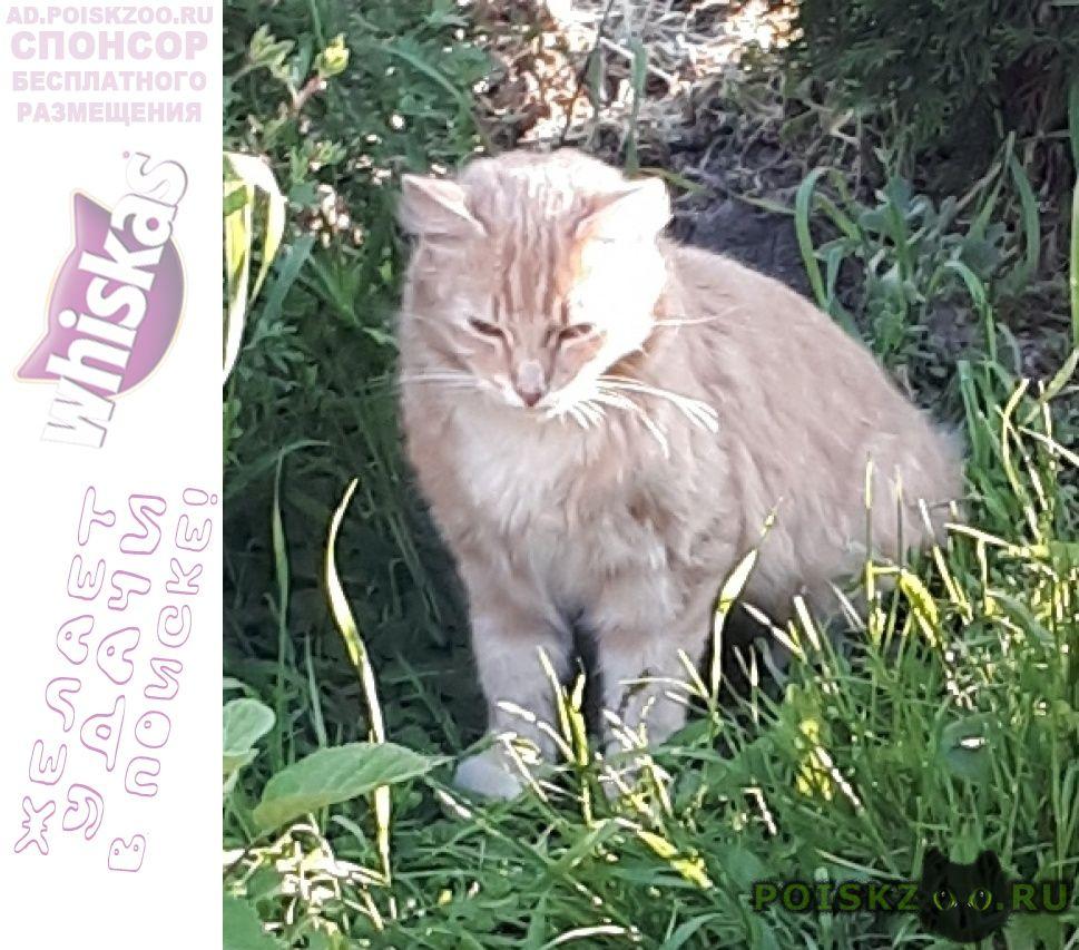 Пропал кот г.Гатчина