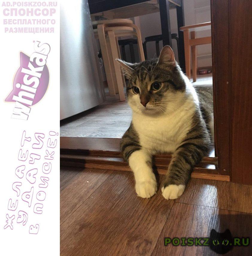 Пропал кот г.Симферополь