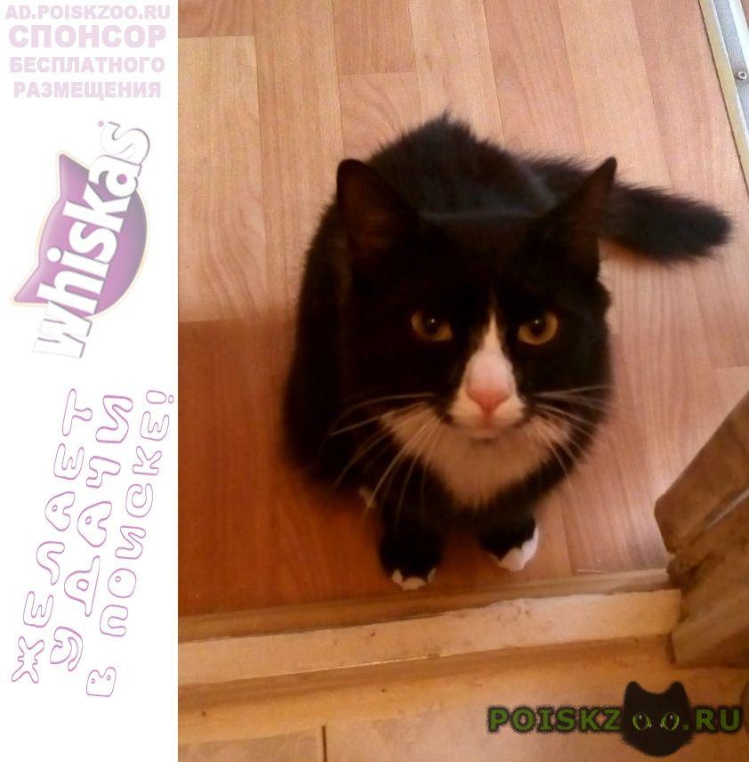 Пропал кот вознаграждение гарантируется г.Москва