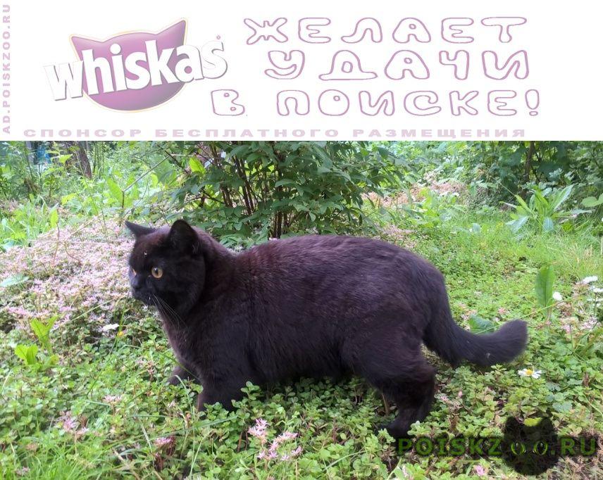 Пропал кот г.Кубинка
