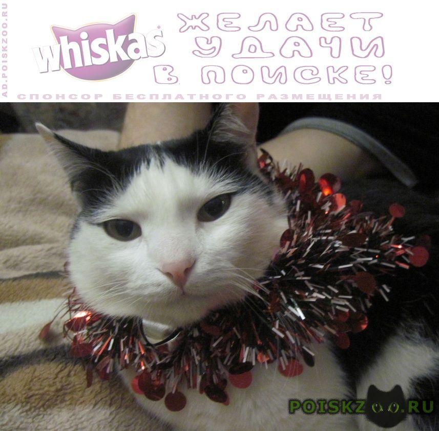 Пропал кот чернобелый, первомайский раен г.Минск