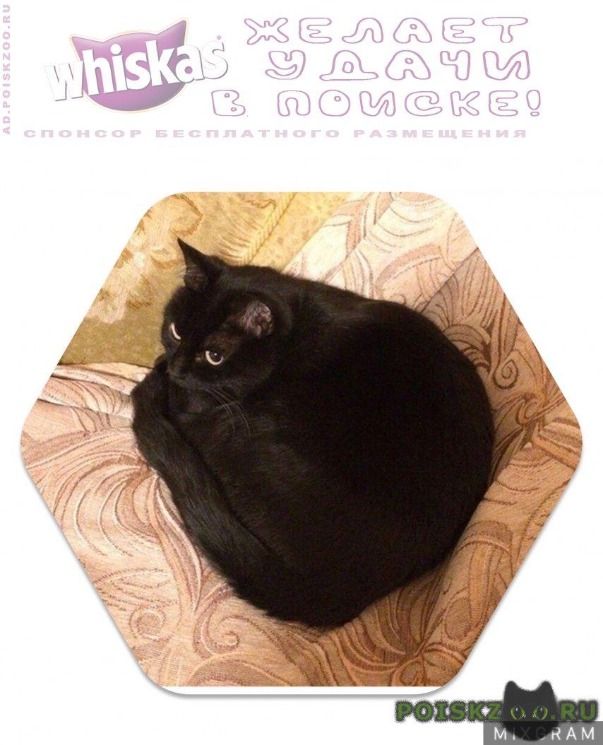 Пропала кошка черная г.Москва