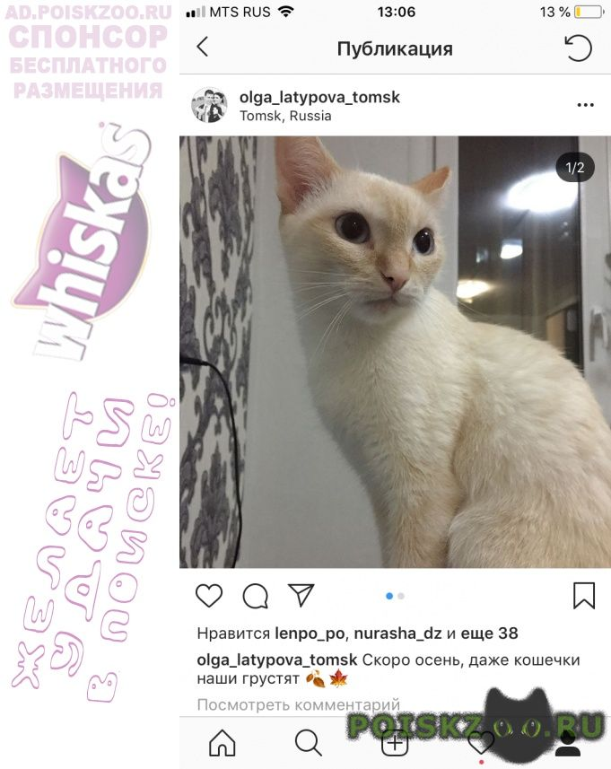 Пропала кошка ивана черных 28 г.Томск