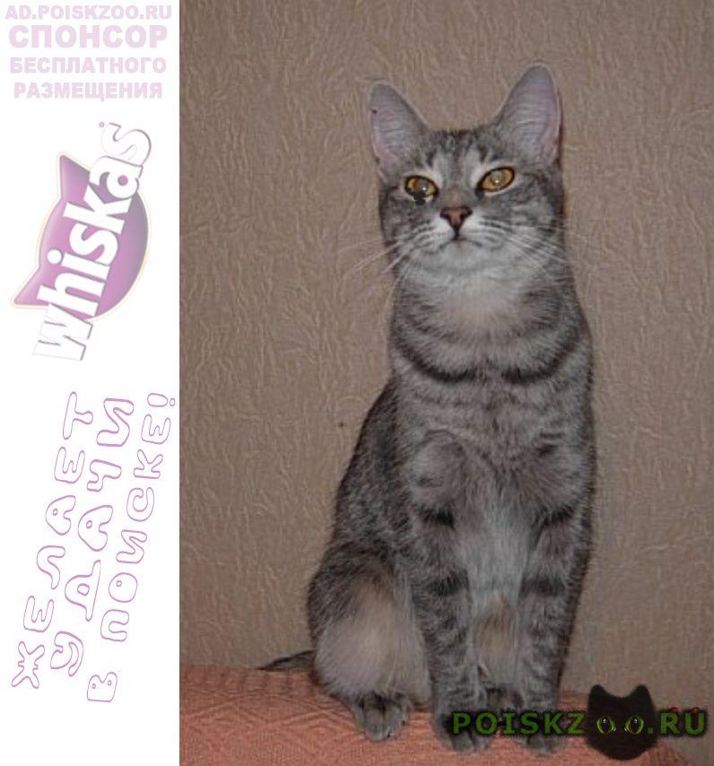 Пропала кошка серая в полоску с на ростом на глазу г.Санкт-Петербург