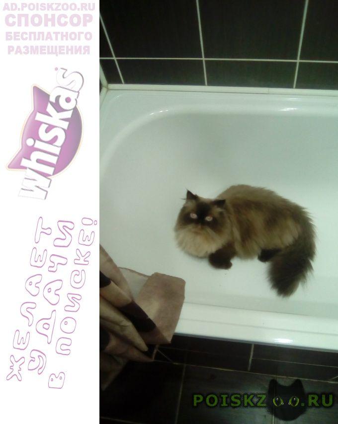 Пропал кот г.Пенза