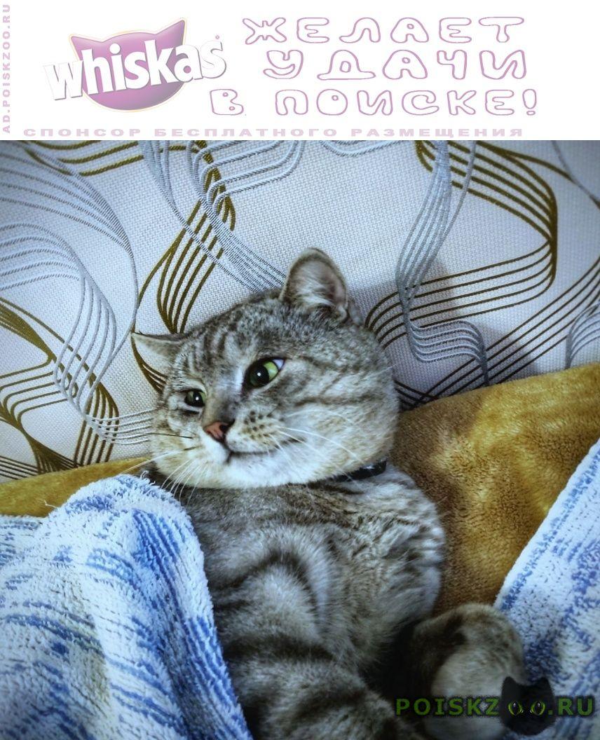 Пропал кот г.Белгород