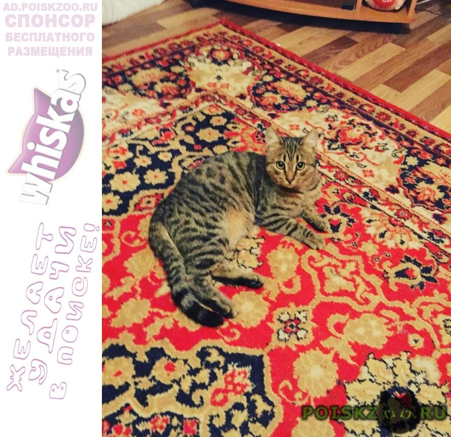Пропал кот г.Новосибирск
