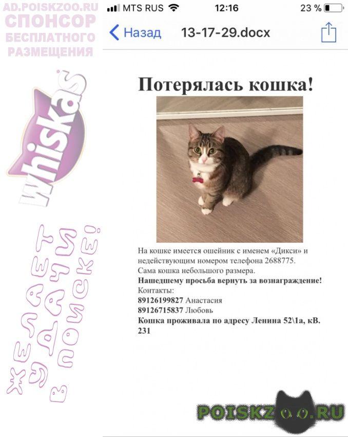 Пропала кошка г.Екатеринбург