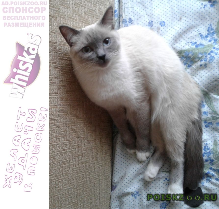 Пропала кошка потерялась  порода тайская г.Екатеринбург