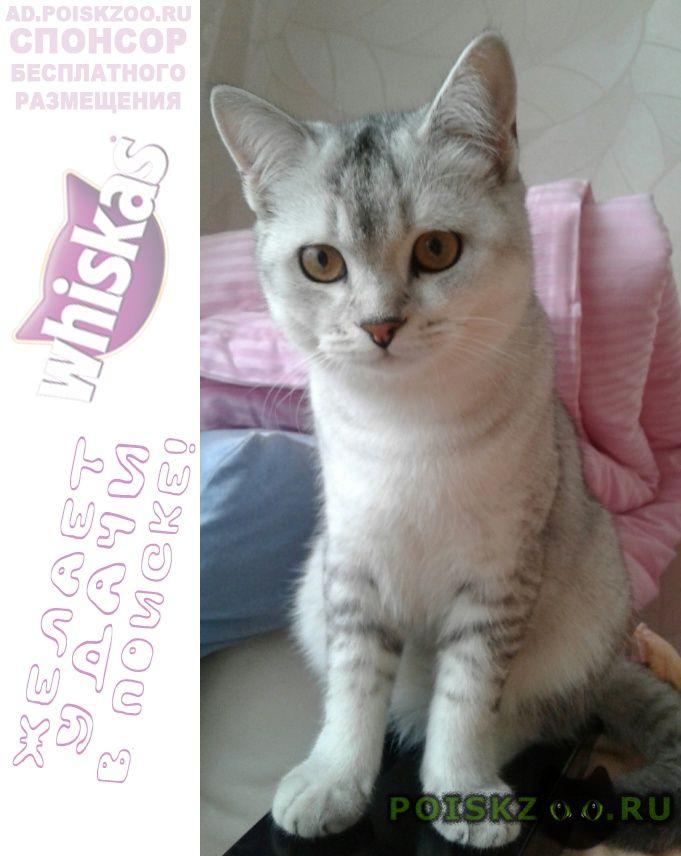 Пропал кот вознаграждение нашедшему г.Сургут