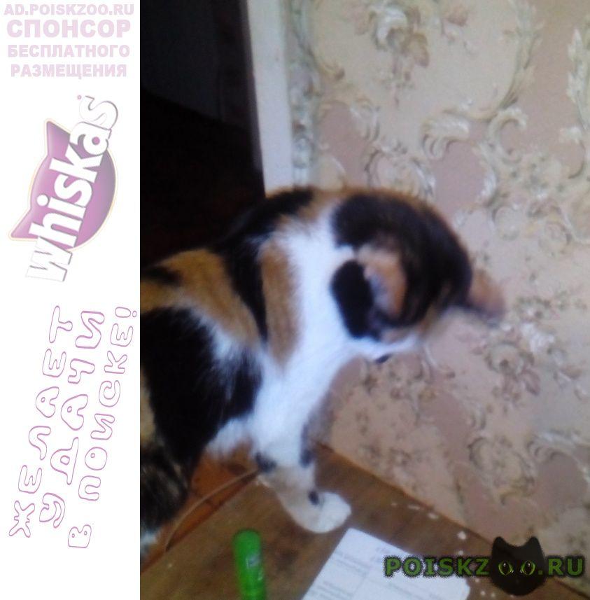 Пропала кошка г.Братск