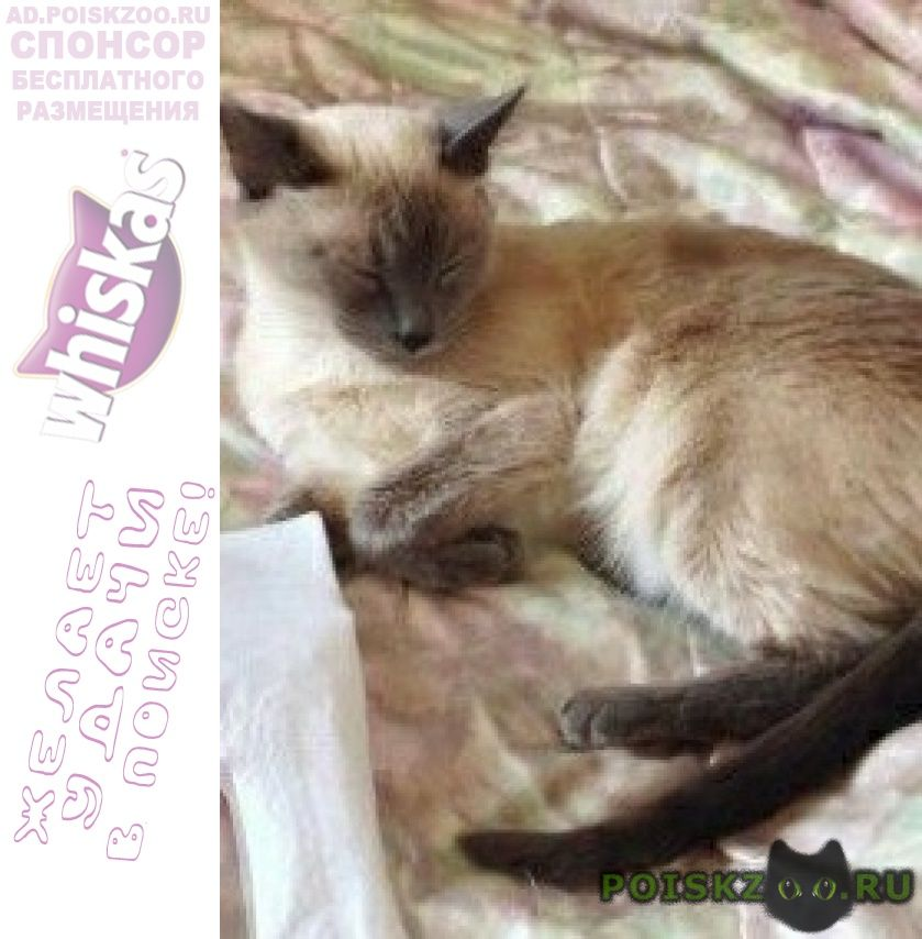 Пропала кошка в ском районе г.Чехов