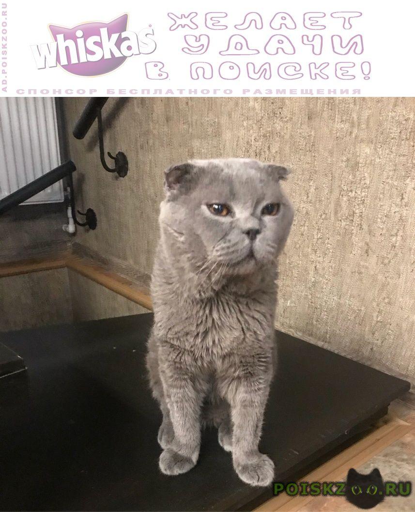 Пропал кот вислоухий серый шотландец г.Москва