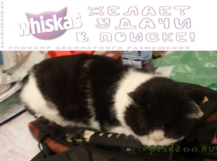 Пропал кот черно-белый г.Москва