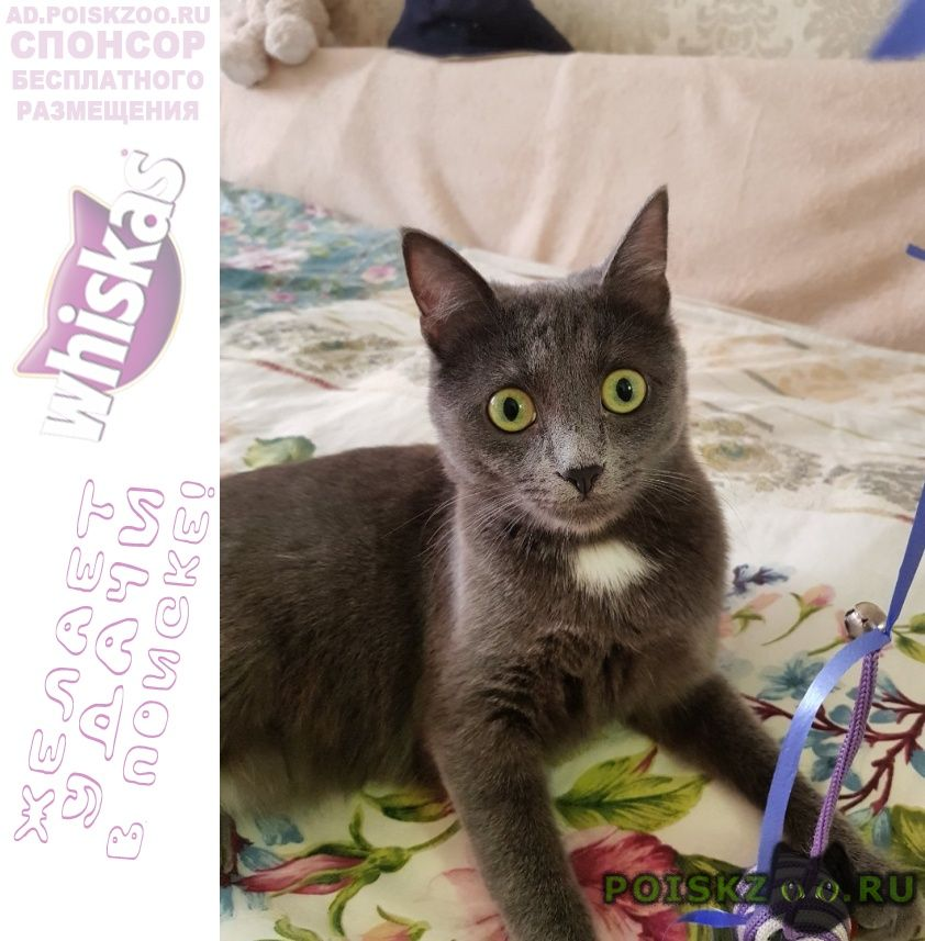 Пропала кошка помогите найти друга г.Воронеж