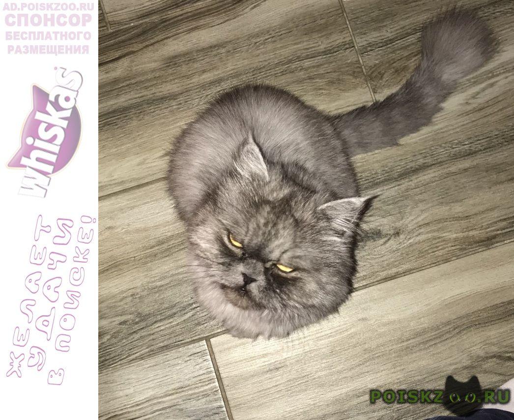 Пропала кошка в п. экодолье г.Обнинск