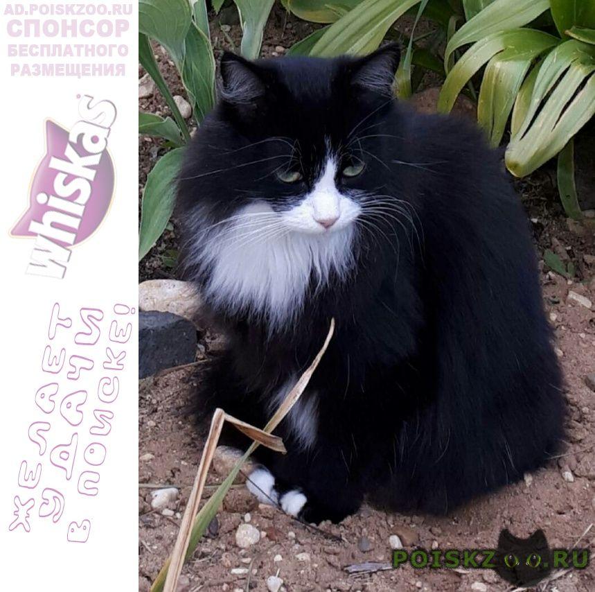 Пропала кошка г.Кимры