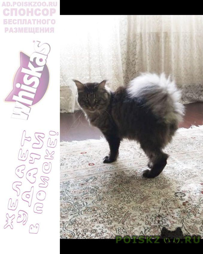 Пропал кот мейн-кун. п. трёхгорка г.Можайск