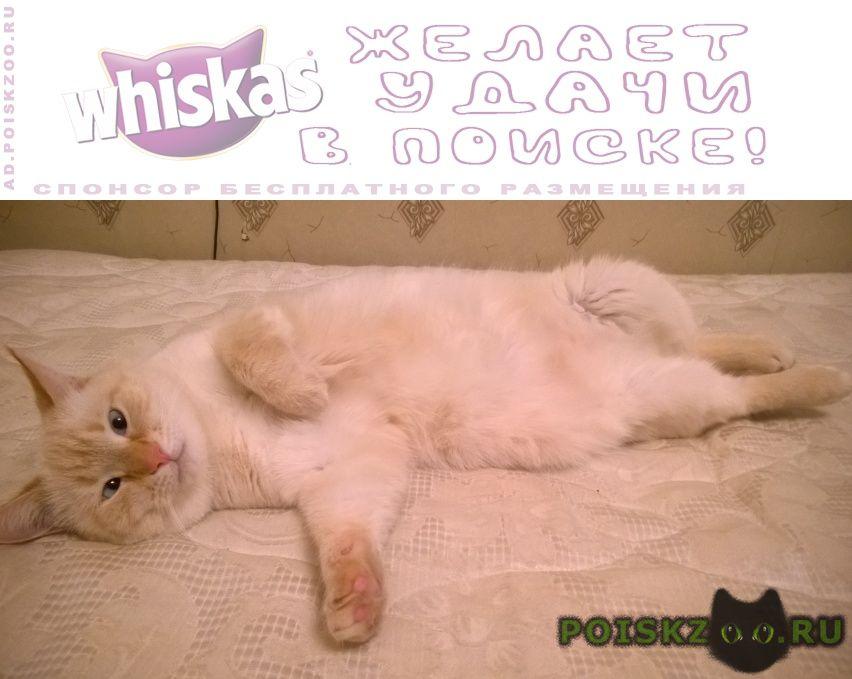 Пропал кот белый гладкошерстный г.Москва