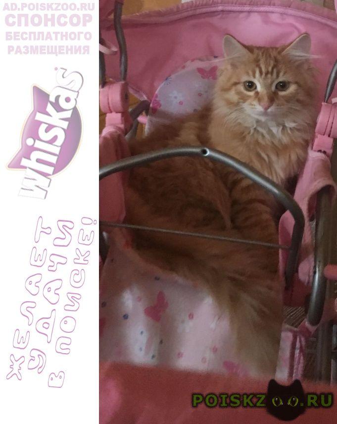 Пропала кошка, ул. лескова г.Москва