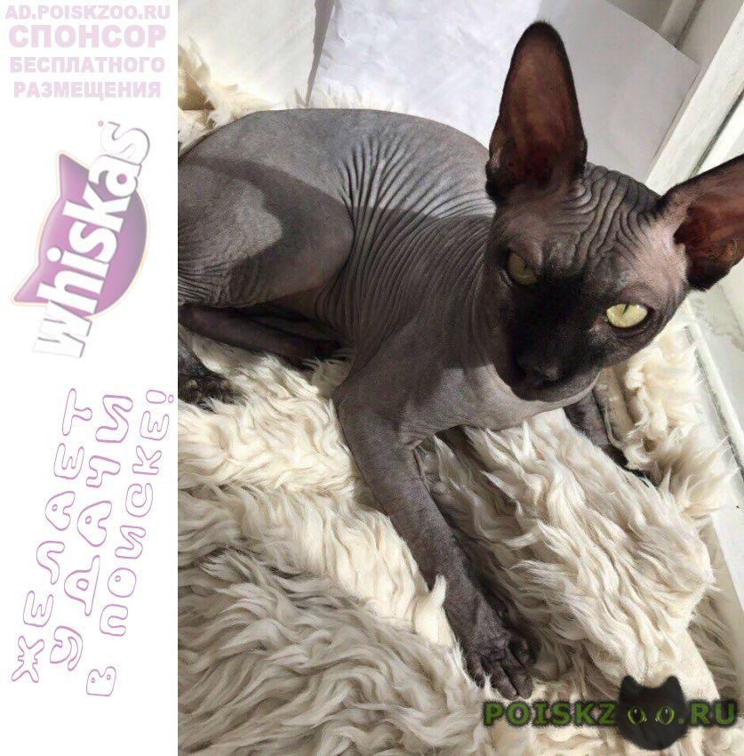 Пропала кошка кот г.Иваново