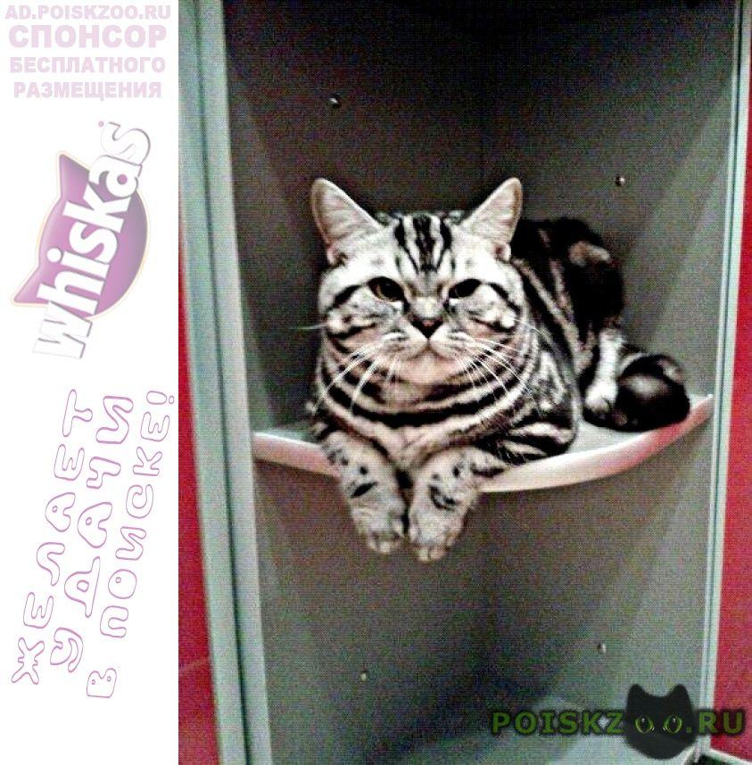 Пропал кот г.Великий Новгород (Новгород)