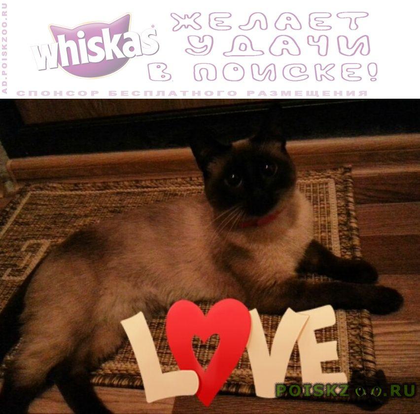 Пропала кошка сиамская г.Москва