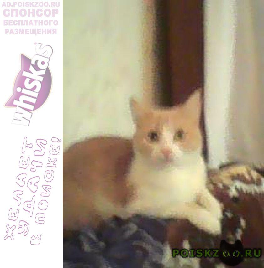 Пропала кошка в п. мосрентген г.Москва