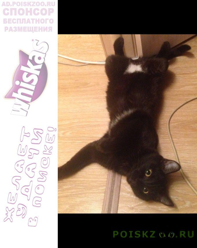 Пропала кошка зовут мася г.Екатеринбург