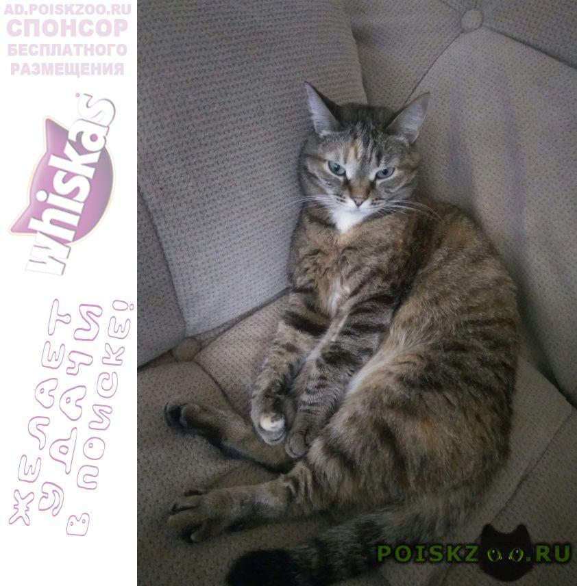 Пропала кошка ищут хозяева г.Калининград (Кенигсберг)
