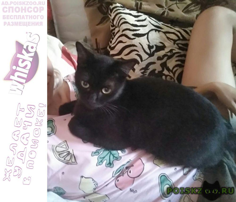 Пропала кошка член семьи. г.Краснодар