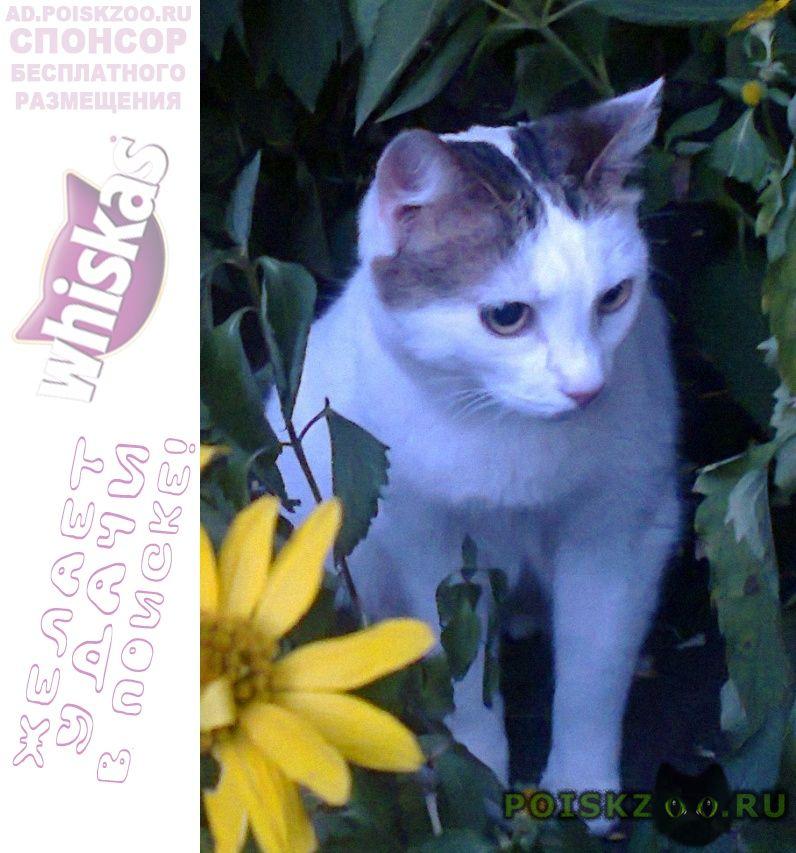Пропала кошка наш член семьи г.Воронеж