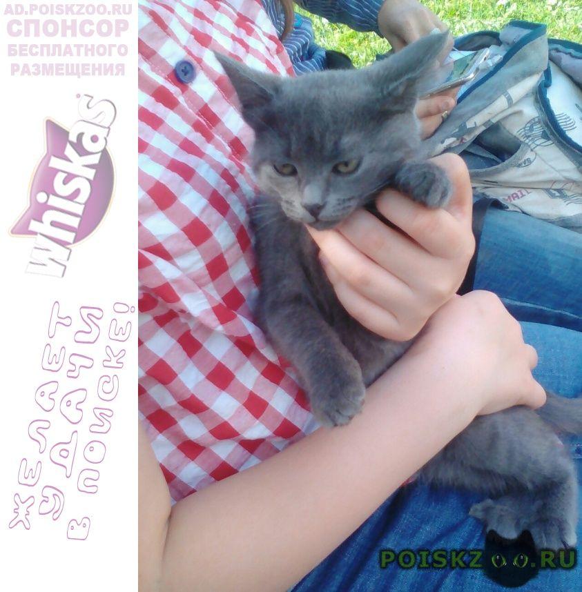 Пропала кошка помогите найти  г.Вологда