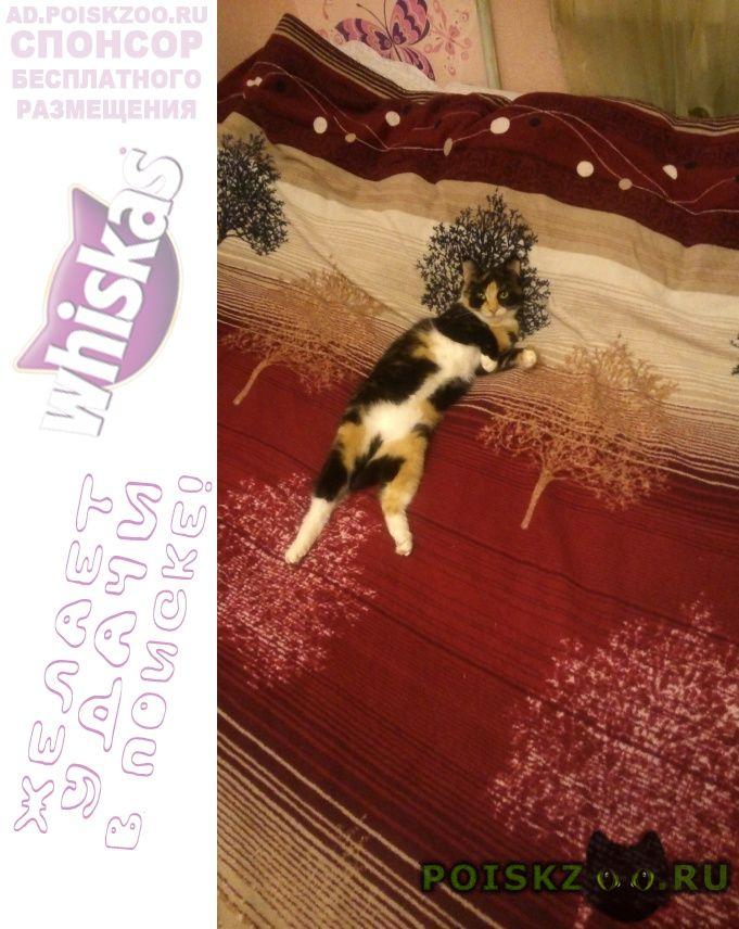 Пропала кошка г.Томск