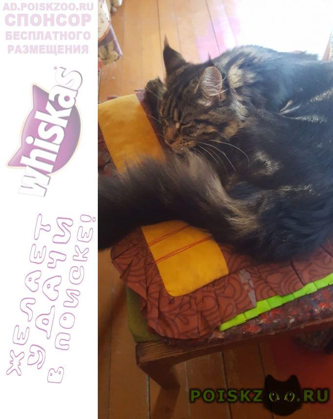 Пропал кот вознагрождение г.Солнечногорск