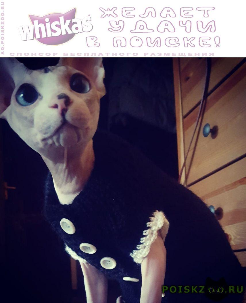 Пропала кошка г.Лыткарино