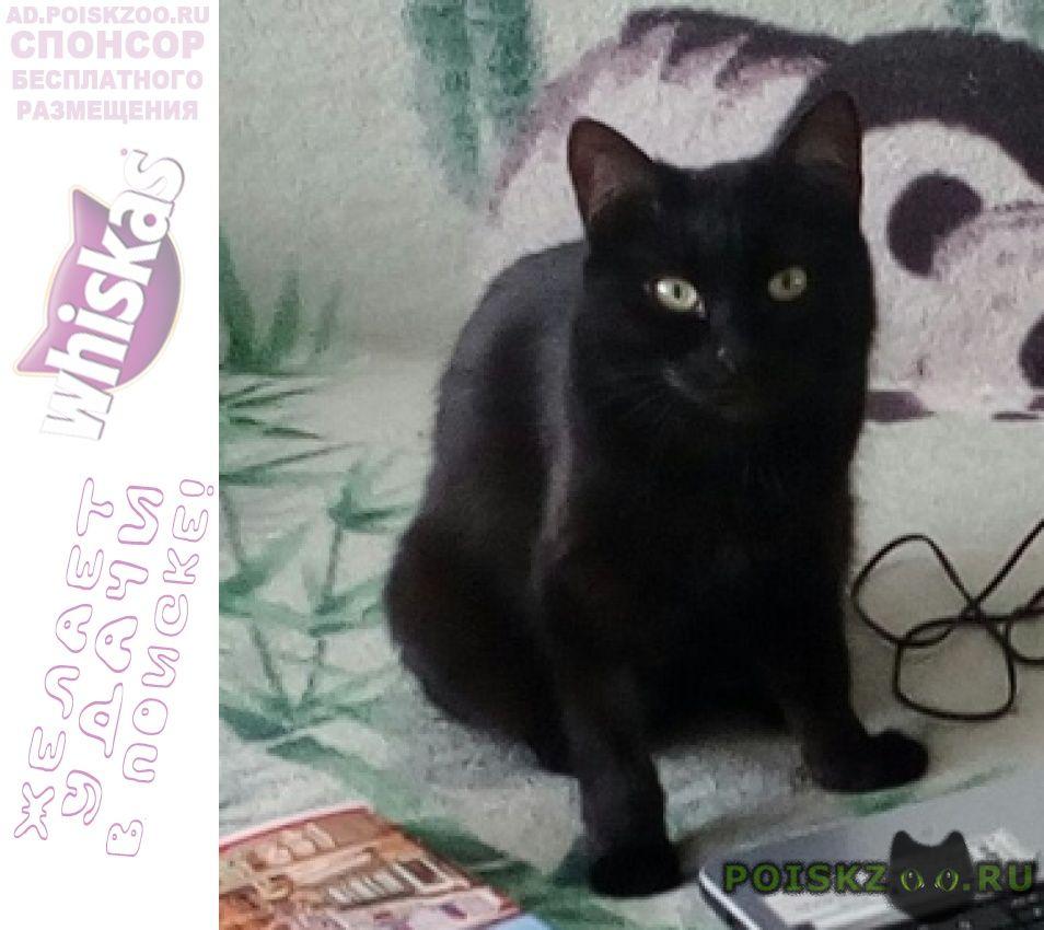 Пропала кошка черная северный г.Казань