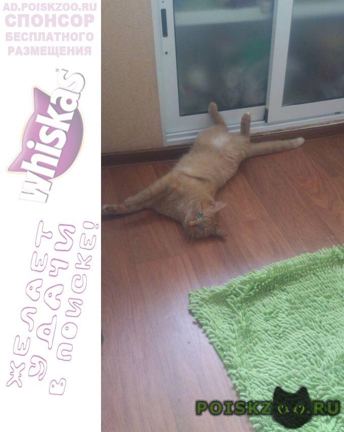 Пропал котик г.Нижневартовск