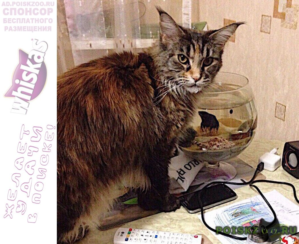 Пропала кошка украдена г.Видное