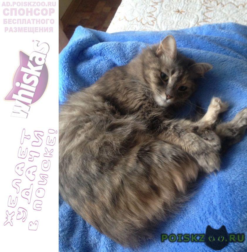 Пропала кошка потерялась 15 июля перед грозой г.Хабаровск