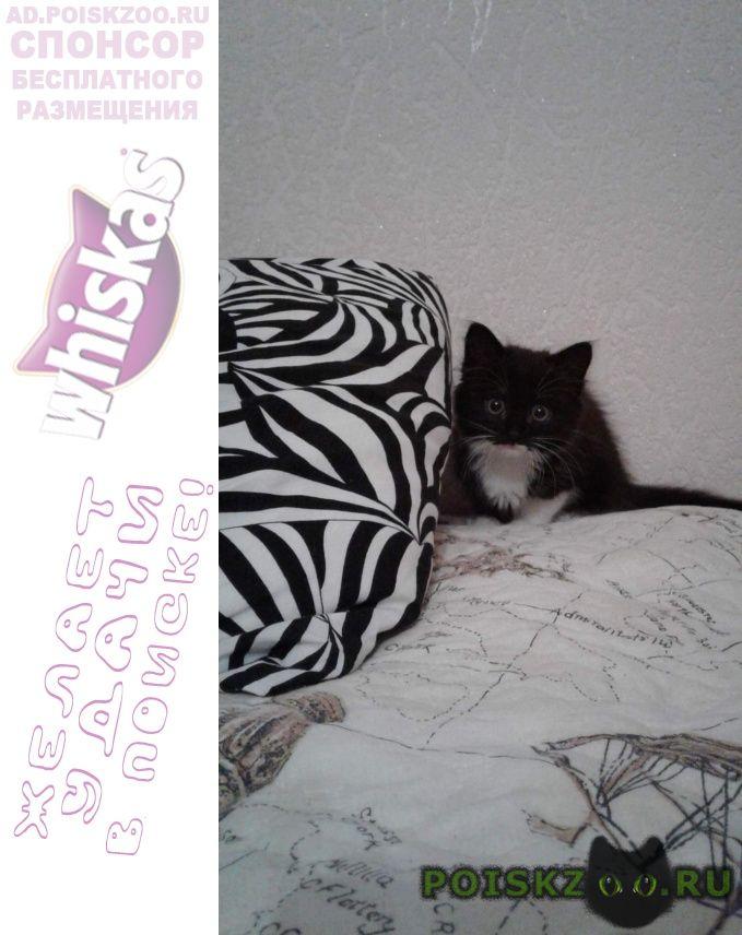 Пропала кошка по имени сюзи г.Сочи
