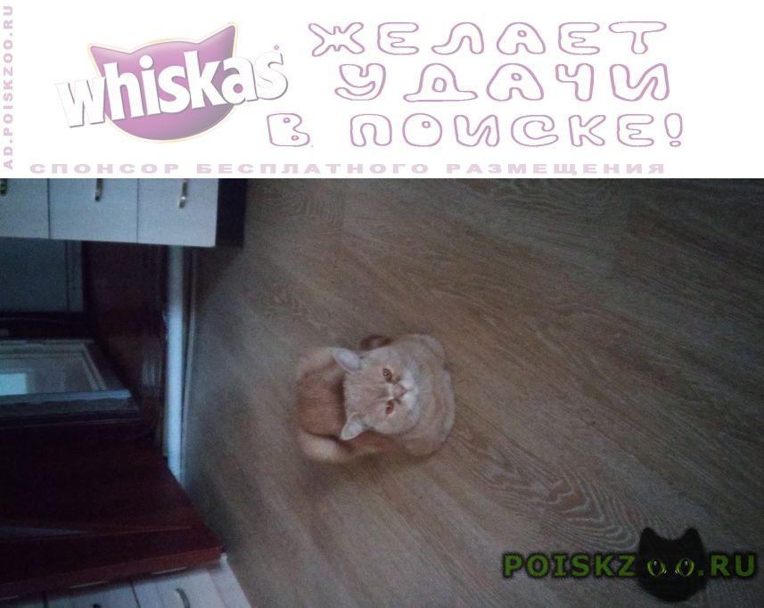 Пропал кот г.Брянск