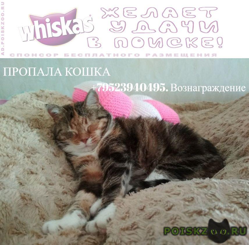 Пропала кошка потерялась в районе федора абрамова 23к1 г.Санкт-Петербург
