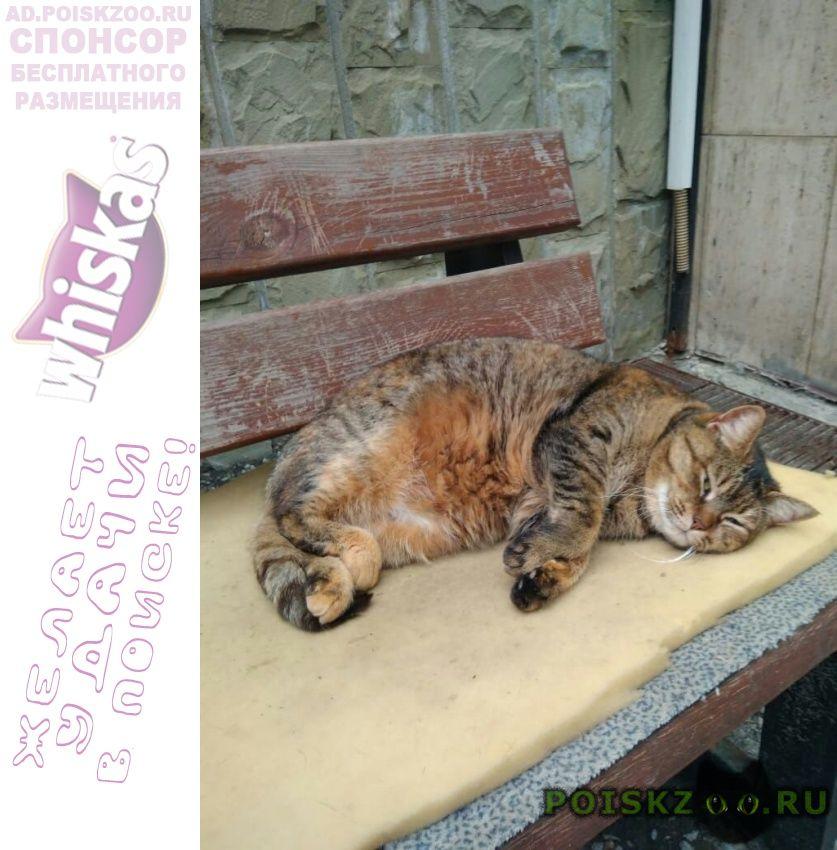 Пропала кошка sos  г.Сочи