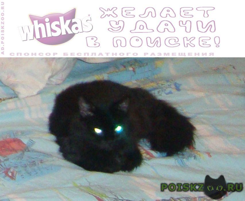 Пропала кошка г.Барнаул