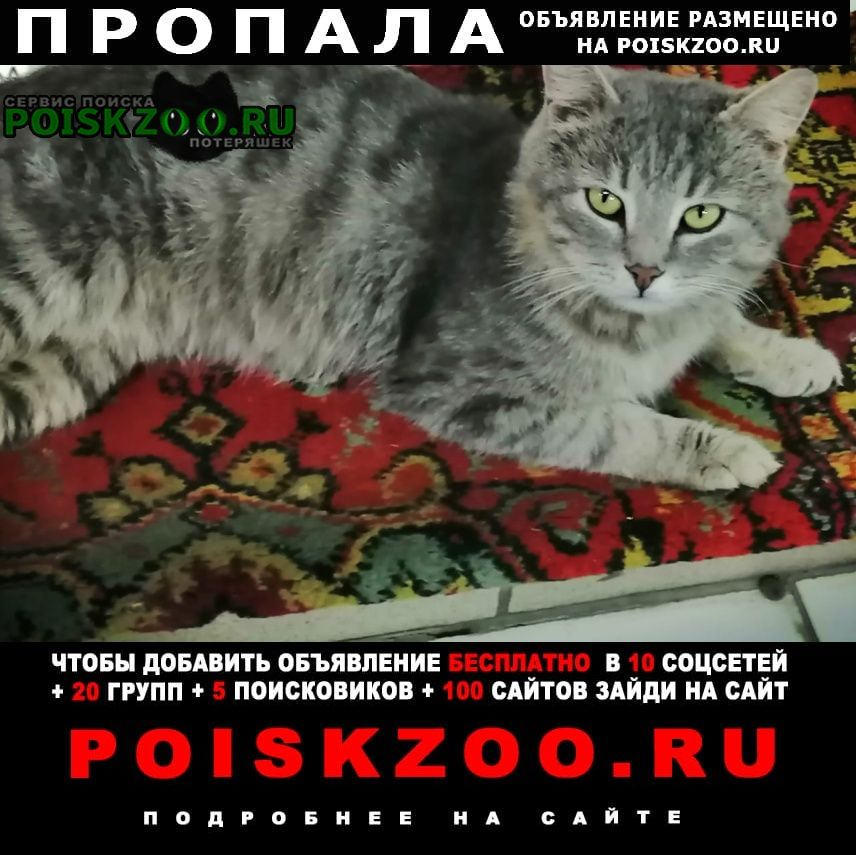 Пропала кошка кот светло-серый Саранск