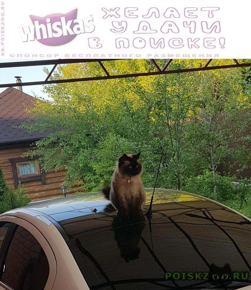 Пропал кот аракчино г.Казань
